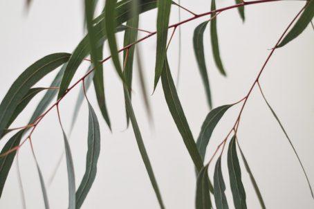 VITALITY sojakaars eucalyptus Good Viba and Co