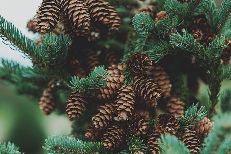 EARTHING geurkaars sojakaars pine tree