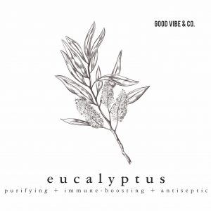 Eucalyptus essential oil by Good Vibe & Co